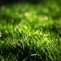 Why is my neighbors lawn always greener?